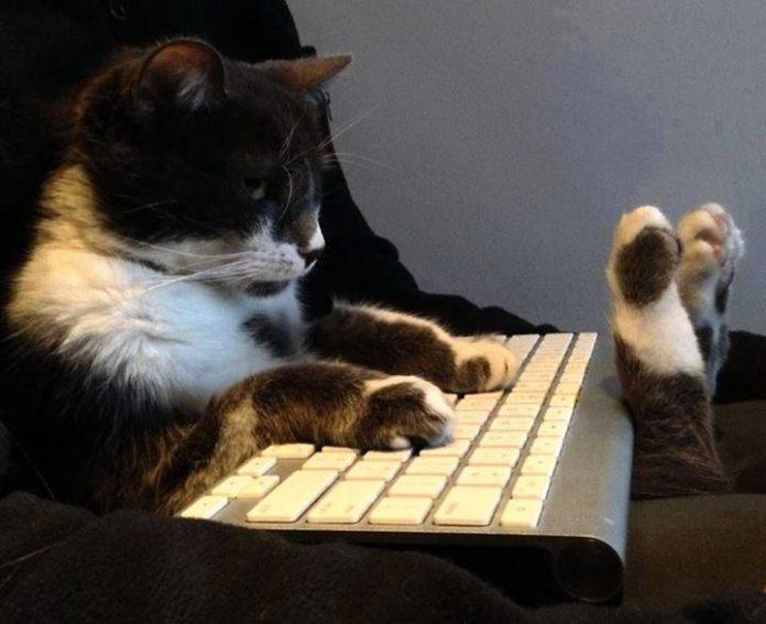 chat geek